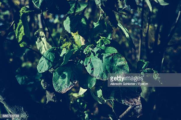 close-up of green leaves growing outdoors - albrecht schlotter foto e immagini stock