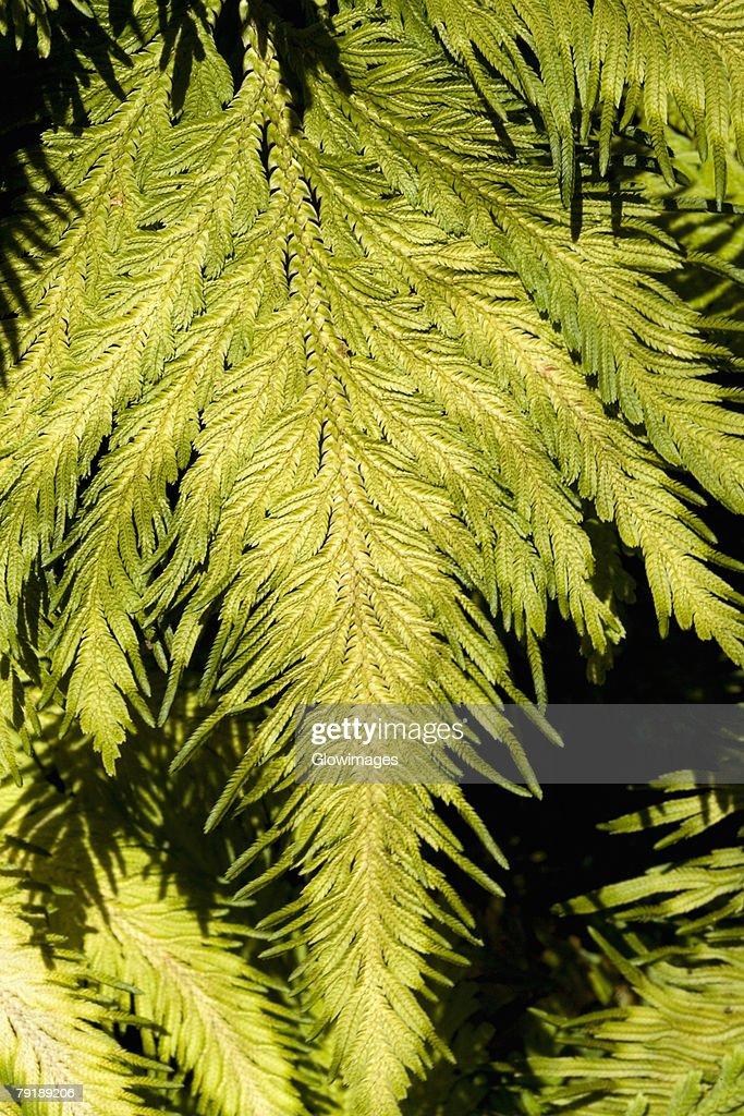 Close-up of green leaves in a botanical garden, Hawaii Tropical Botanical Garden, Hilo, Big Island, Hawaii Islands, USA : Foto de stock