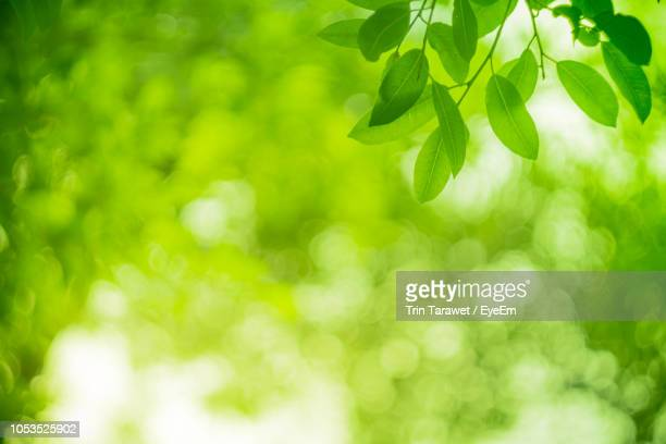 close-up of green leaves on plant - onscherpe achtergrond stockfoto's en -beelden
