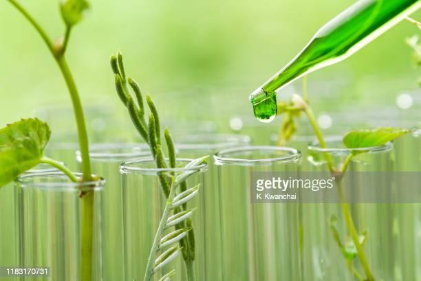 close-up of green leaves on plant - químico imagens e fotografias de stock