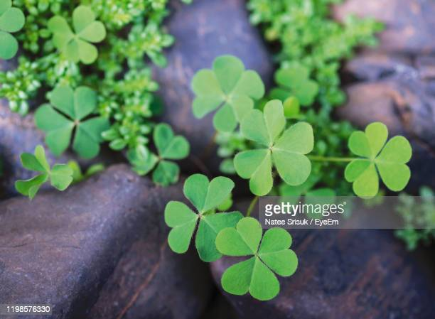 close-up of green leaves on plant - differential focus stock-fotos und bilder