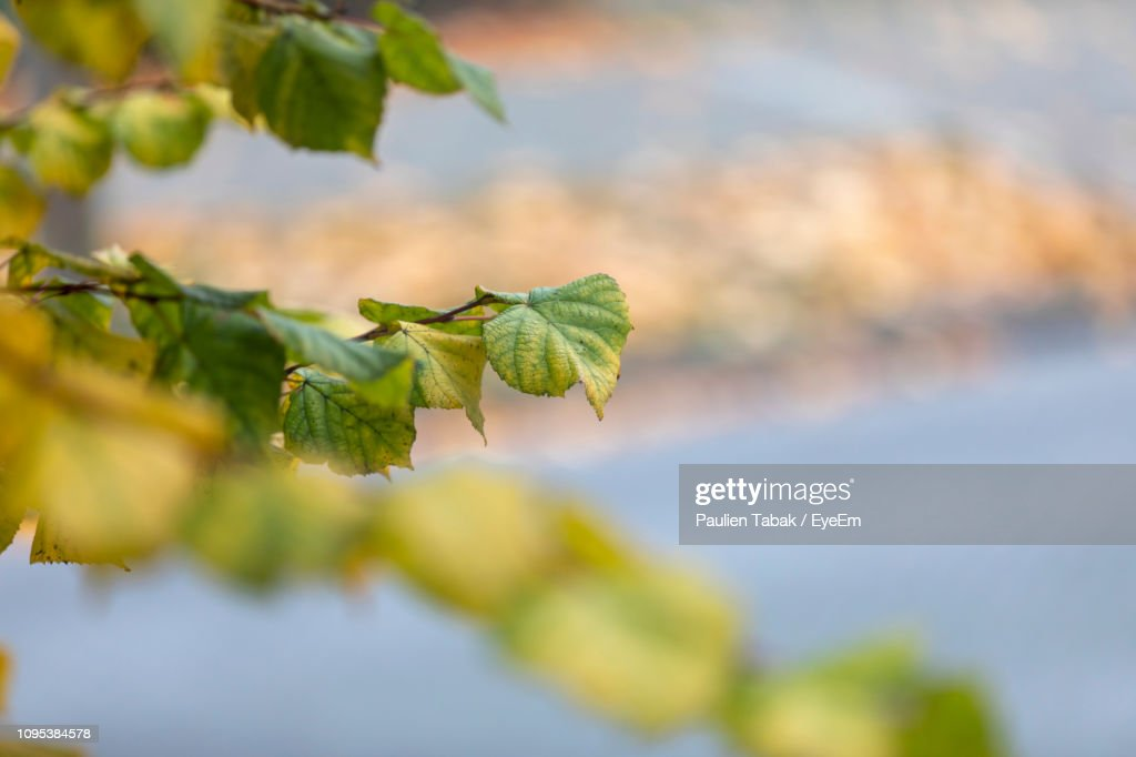 Close-Up Of Green Leaves : Stockfoto
