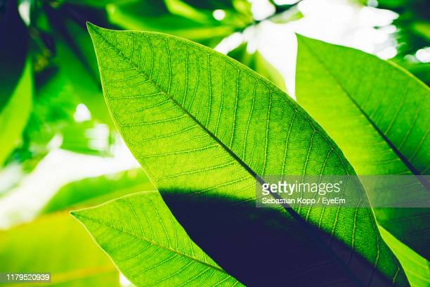 close-up of green leaves - carbon dioxide stock photos and pictures