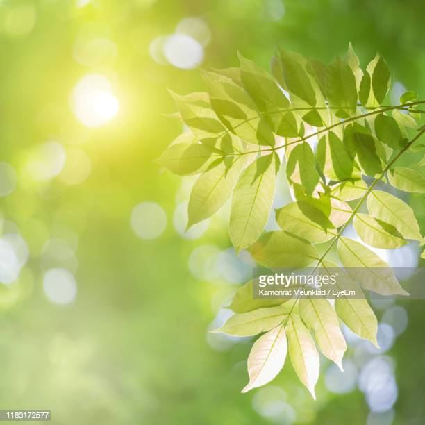 close-up of green leaves - gras stock pictures, royalty-free photos & images