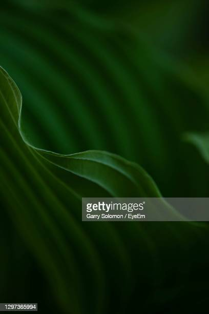close-up of green leaves - growth stock pictures, royalty-free photos & images