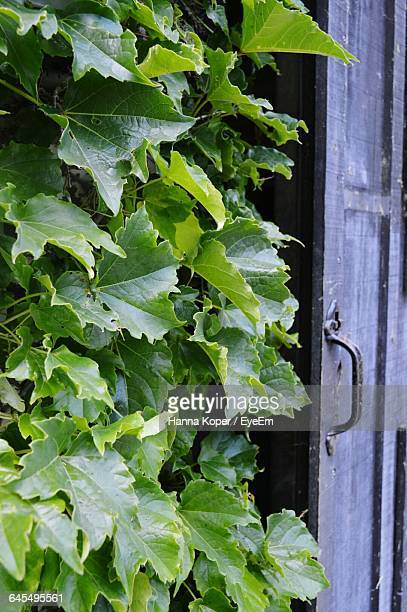 close-up of green leaves - koper stock photos and pictures
