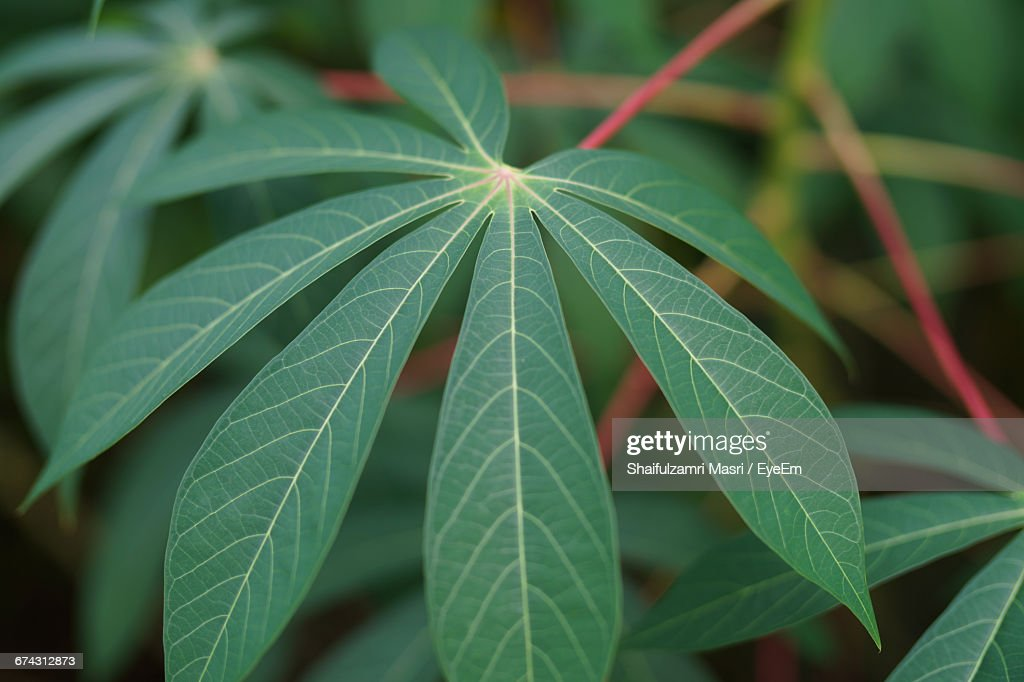 Close-Up Of Green Leaves : Stock Photo