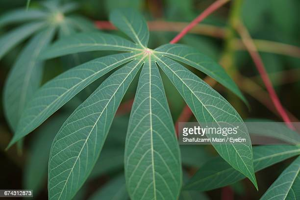 close-up of green leaves - shaifulzamri stock pictures, royalty-free photos & images
