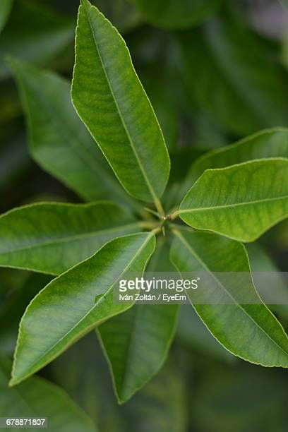 close-up of green leaves - iván zoltán stock pictures, royalty-free photos & images