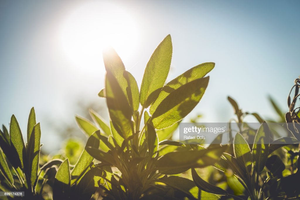 Close-up of green leaves : Stock-Foto