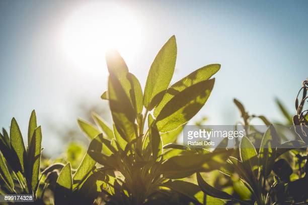 close-up of green leaves - blatt pflanzenbestandteile stock-fotos und bilder