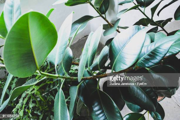 close-up of green leaves - zuzana janekova stock pictures, royalty-free photos & images