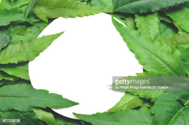 close-up of green leaves - neem tree stock pictures, royalty-free photos & images