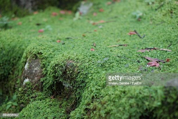 Close-Up Of Green Moss On Rock