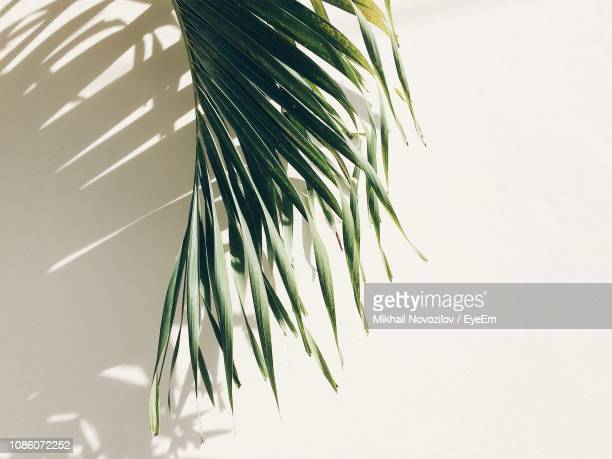 close-up of green palm leaf - palm leaf stock pictures, royalty-free photos & images