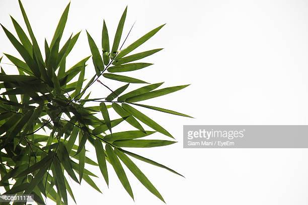 Close-Up Of Green Plant Against White Background