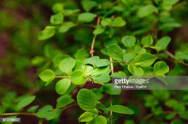 close-up of green plant growing outdoors - piotr hnatiuk foto e immagini stock
