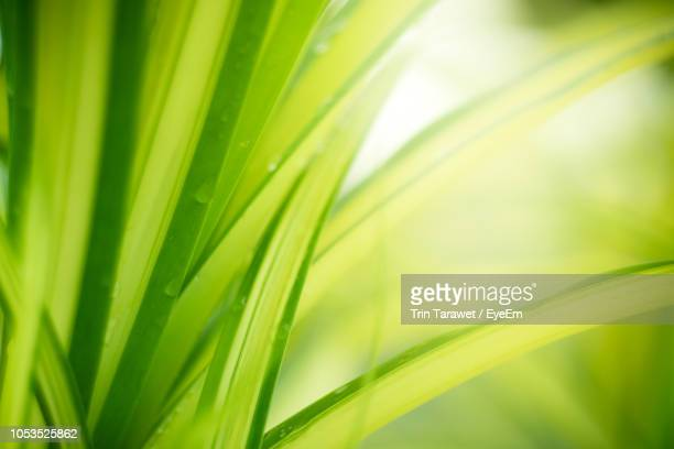 close-up of green plant - blade of grass stock pictures, royalty-free photos & images