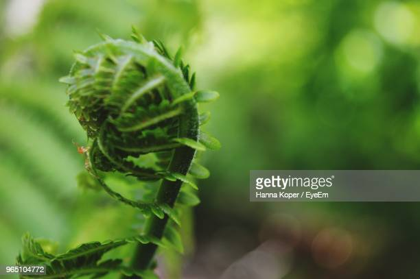 close-up of green plant - koper stock photos and pictures