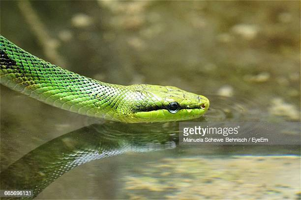 Close-Up Of Green Snake On Water
