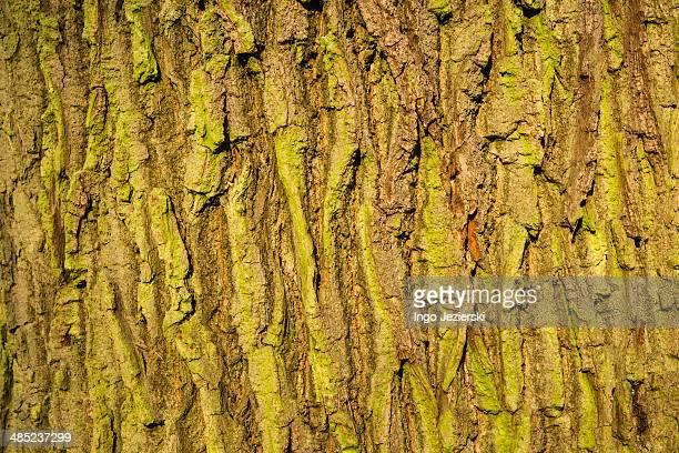 Close-up of greenish tree bark