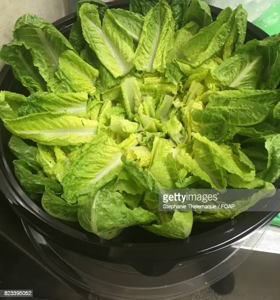 close-up of greens lettuce leaves - romaine lettuce stock photos and pictures