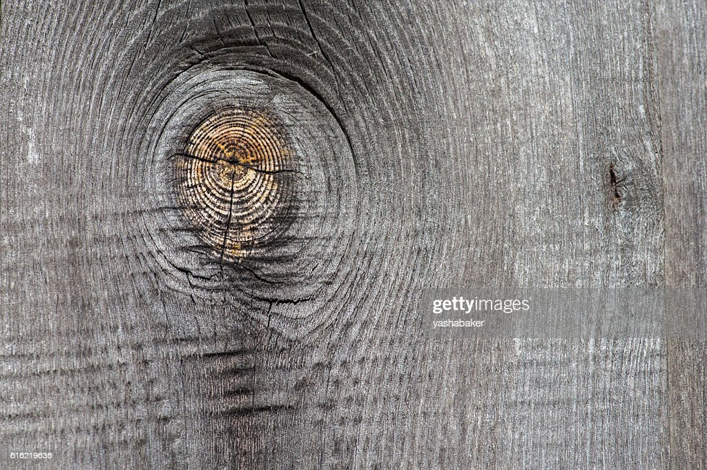 Close-up of grey wood  old planks texture background : Photo