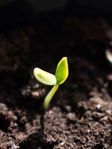 Close-up of growing seedling - gettyimageskorea