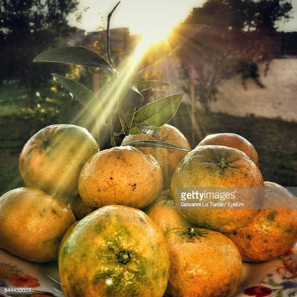 close-up of guavas on table at sunset - guava fruit stock photos and pictures