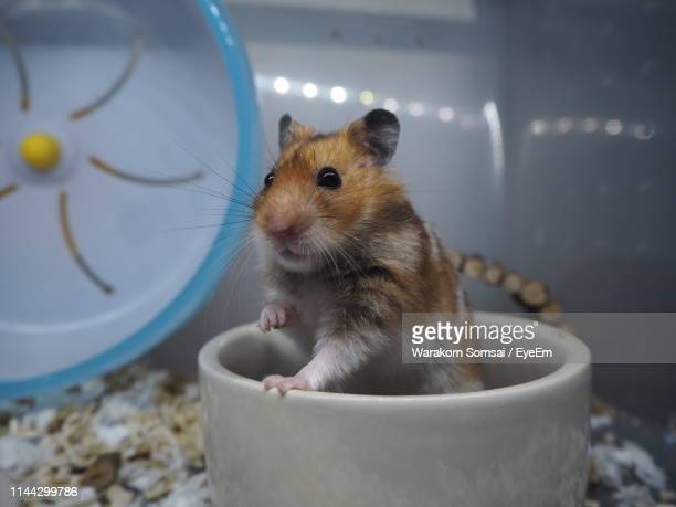 close-up of hamster in container - hamster stock-fotos und bilder