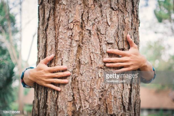 close-up of hand embracing tree trunk - estilo de vida sostenible fotografías e imágenes de stock