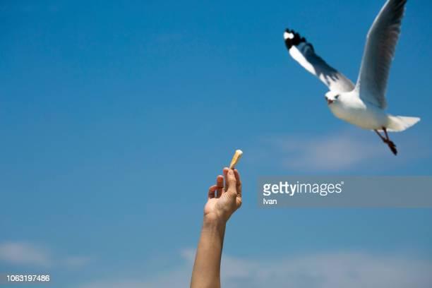 close-up of hand feeding bird against sky - einzelnes tier stock-fotos und bilder