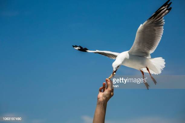 close-up of hand feeding bird against sky - seagull stock pictures, royalty-free photos & images