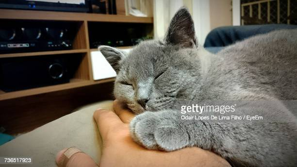 close-up of hand feeding cat relaxing at home - filho stock pictures, royalty-free photos & images
