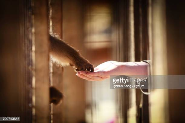 close-up of hand feeding monkey - monkey paw stock photos and pictures