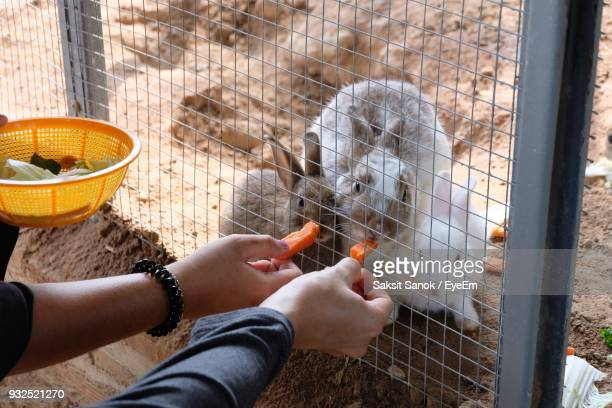 Close-Up Of Hand Feeding Rabbits Through Fence