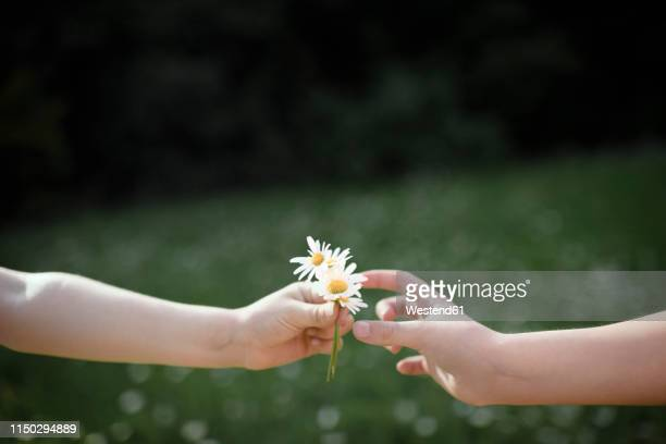 close-up of hand handing over flowers - geben stock-fotos und bilder