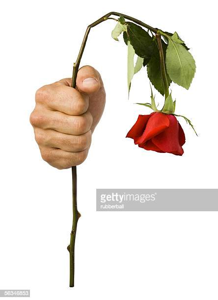 Close-up of hand holding a wilted rose
