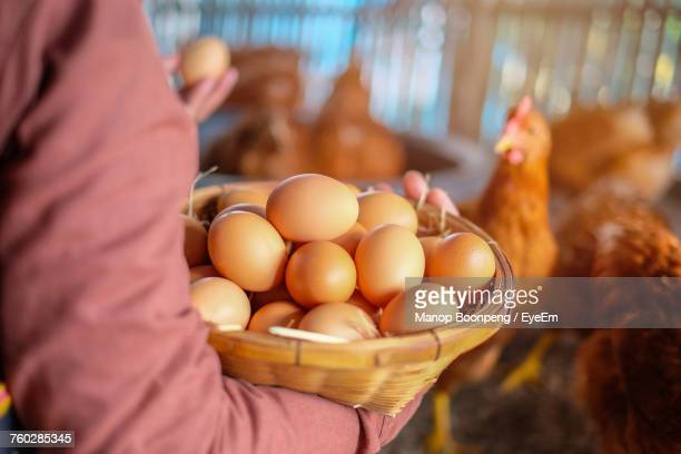 close-up of hand holding basket of eggs - hen stock pictures, royalty-free photos & images