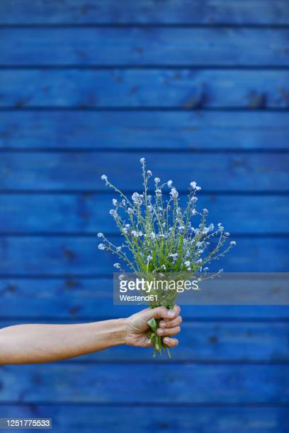 close-up of hand holding bunch of forget-me-not - forget me not stock pictures, royalty-free photos & images