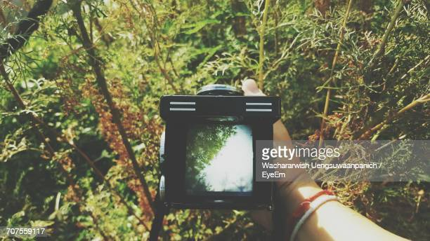 Close-Up Of Hand Holding Camera By Tree