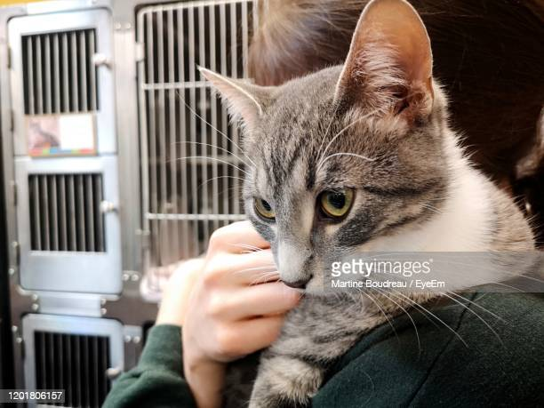 close-up of hand holding cat at animal shelter - pet adoption stock pictures, royalty-free photos & images