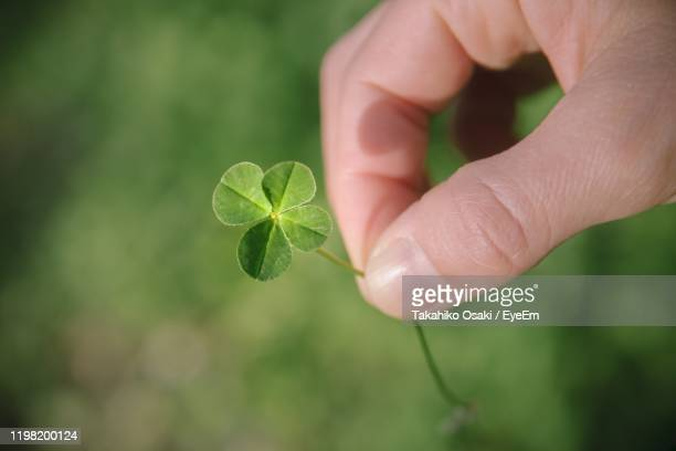 close-up of hand holding clover plant - luck stock pictures, royalty-free photos & images