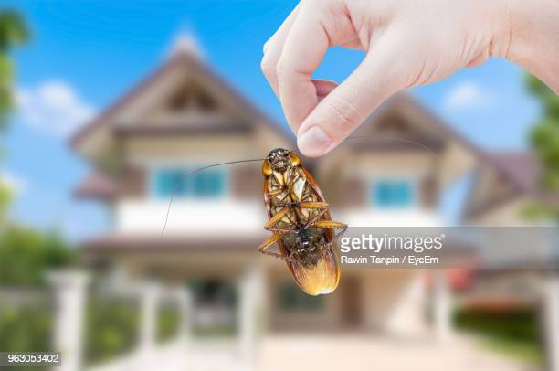 close-up of hand holding cockroach against house - pest stock photos and pictures