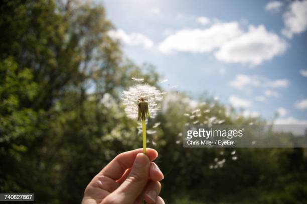 Close-Up Of Hand Holding Dandelion On Field