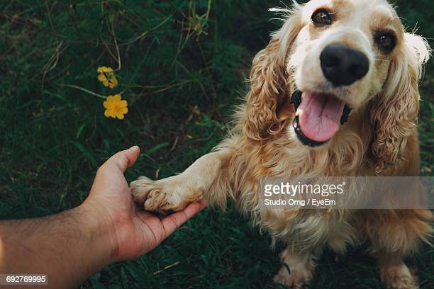 Close-Up Of Hand Holding Dog