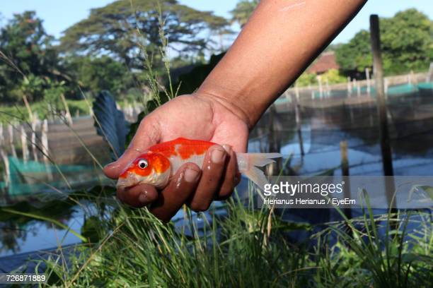 Close-Up Of Hand Holding Fish