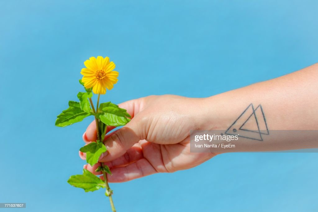 Close-Up Of Hand Holding Flower Against Clear Blue Sky : Stock Photo