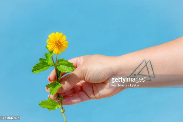 Close-Up Of Hand Holding Flower Against Clear Blue Sky