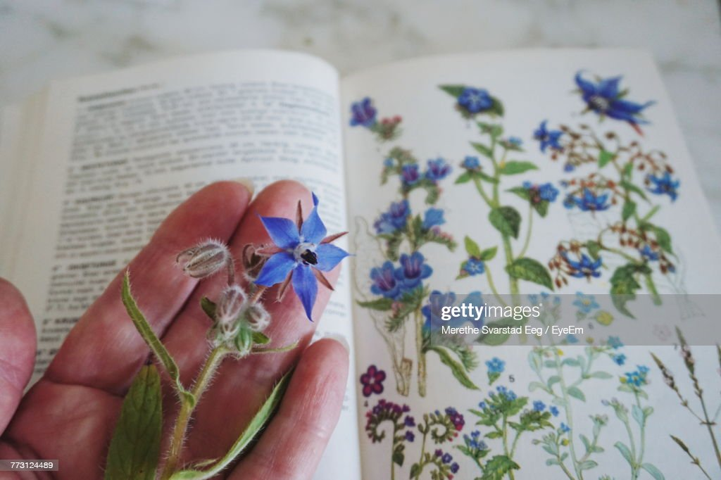 Close-Up Of Hand Holding Flower Over Book At Table : Photo
